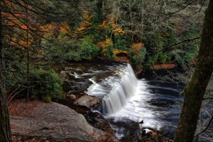 Highlight for Album: Dupont State Forest