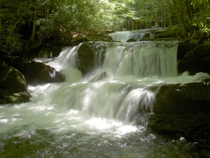 Highlight for Album: Lynn Camp Prong Cascades