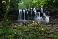 Highlight for Album: West Virginia